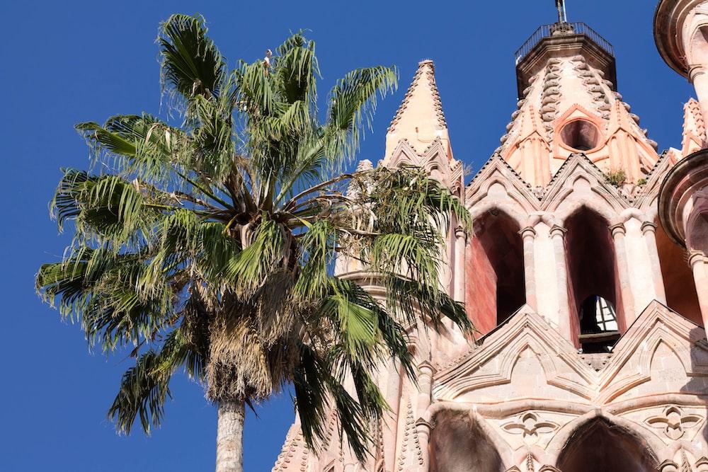 palm tree beside white church