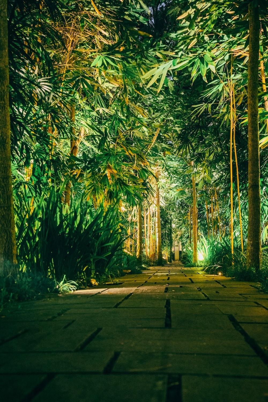 brown footpath between bamboo trees