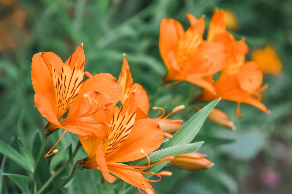 orange petaled flower selective photography