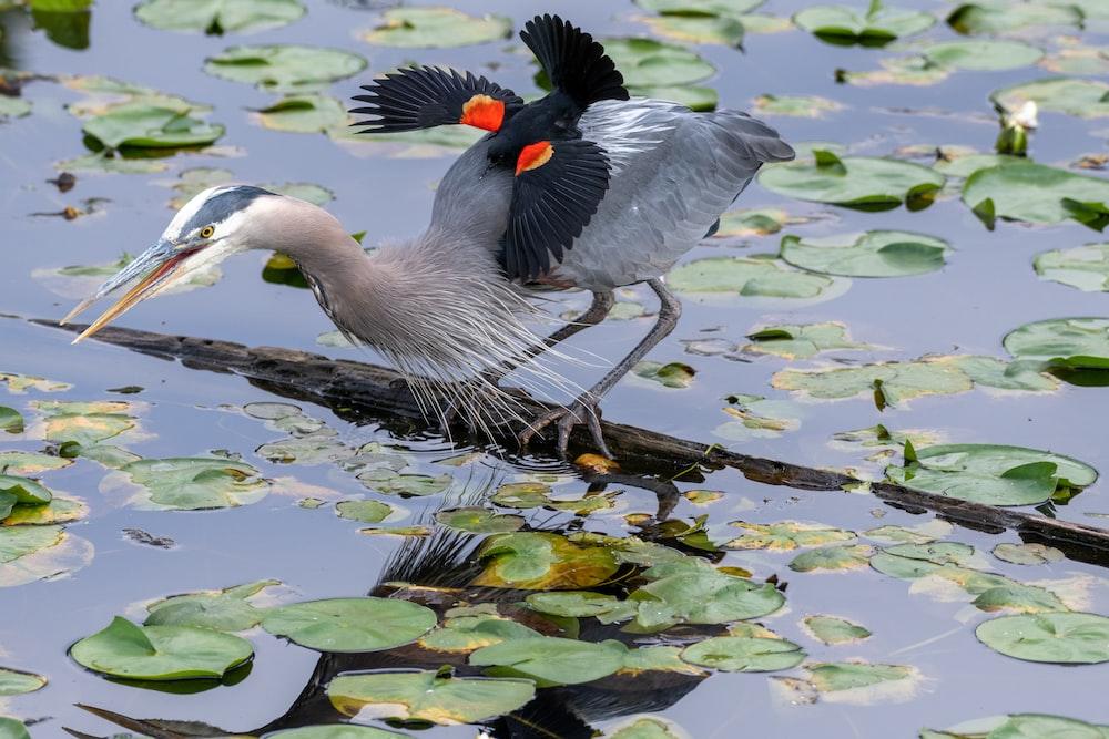 gray bird on log