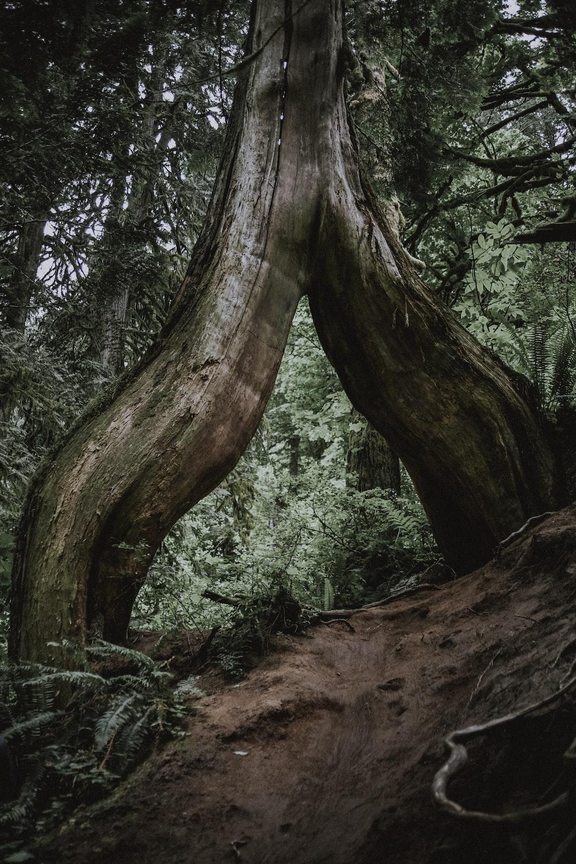 narrow pathway under brown tree trunk