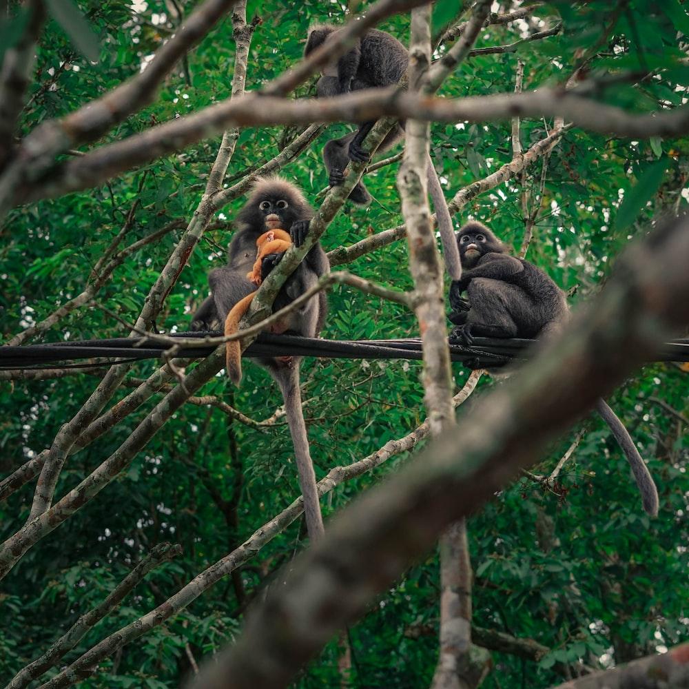 three primates on tree