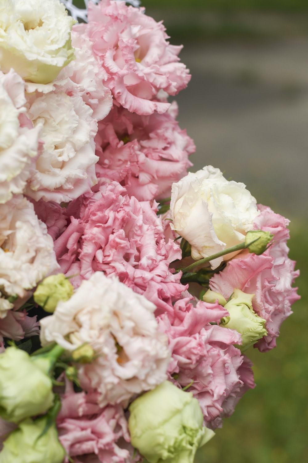 selective focus photography of pink and white rose flowers