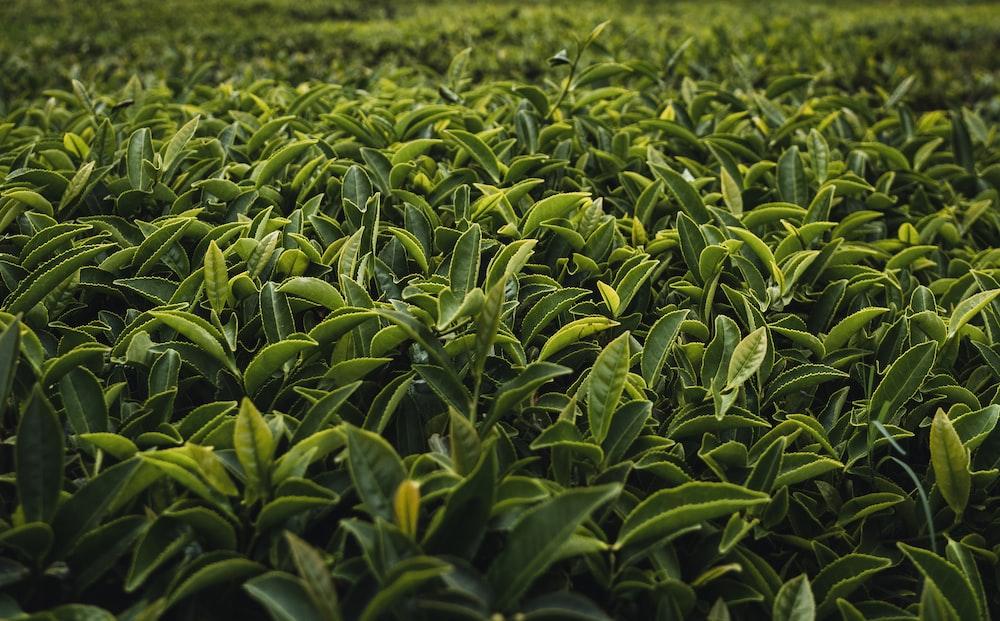 green plant scenery