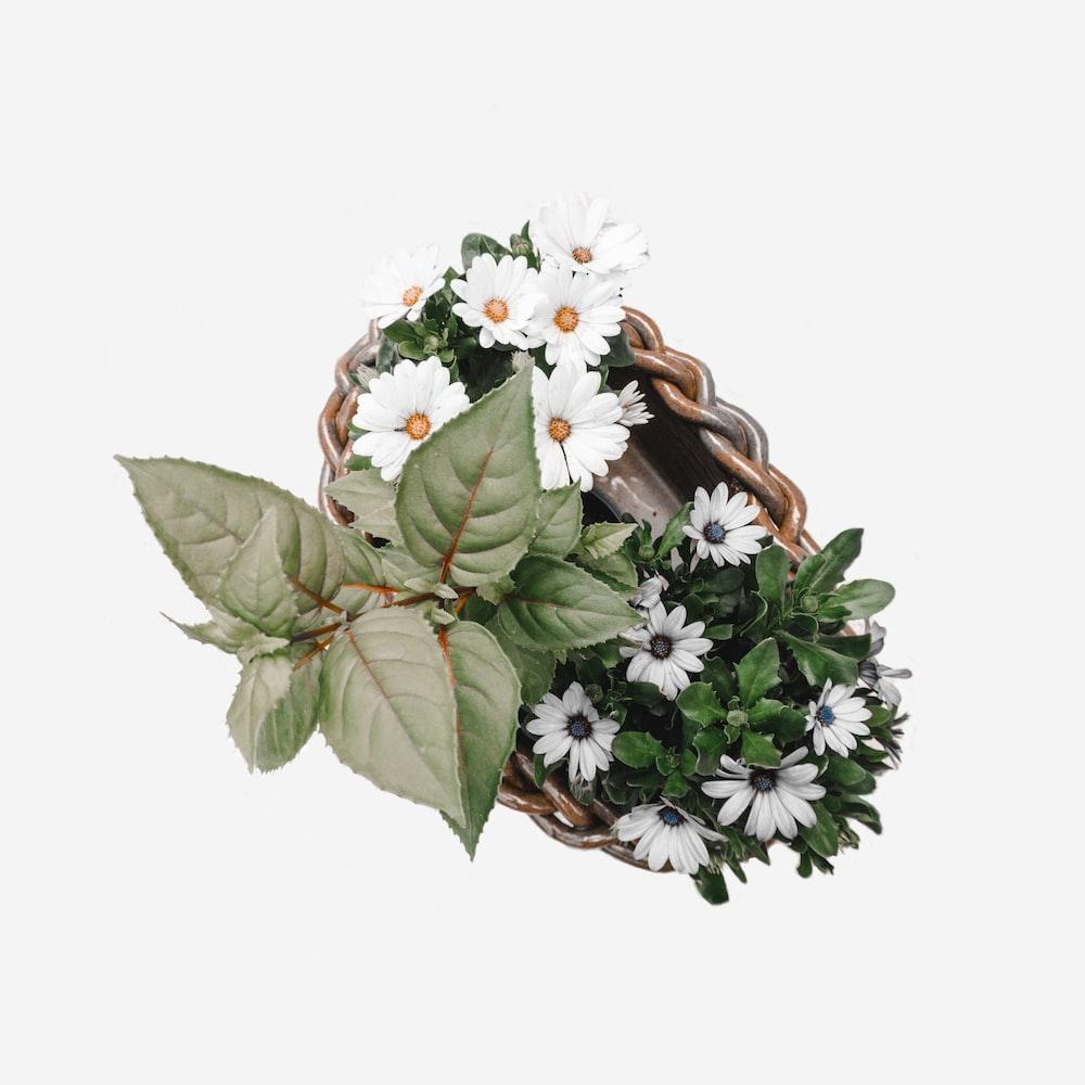white petaled flower on wicker basket