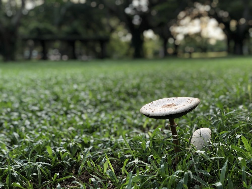 white mushroom on grass field