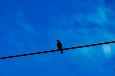 black bird perched on black cable