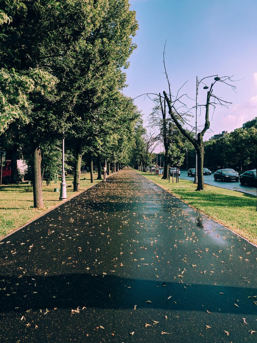 leafless tree near pathway