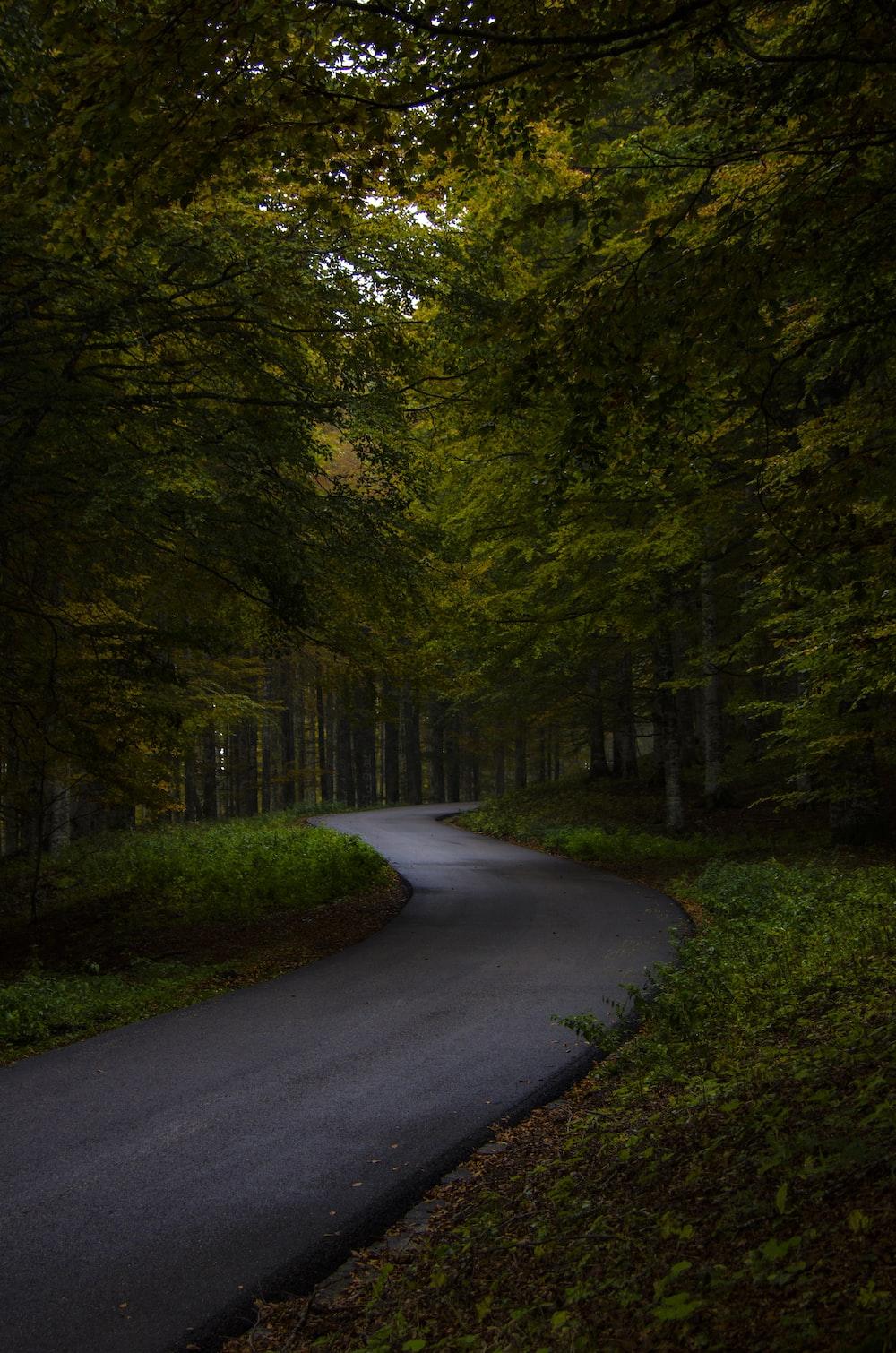 trees besidegrey concrete road