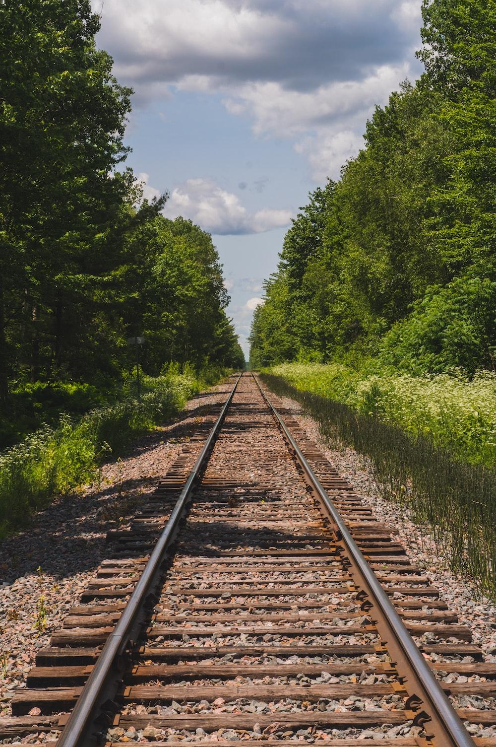 train rail between trees