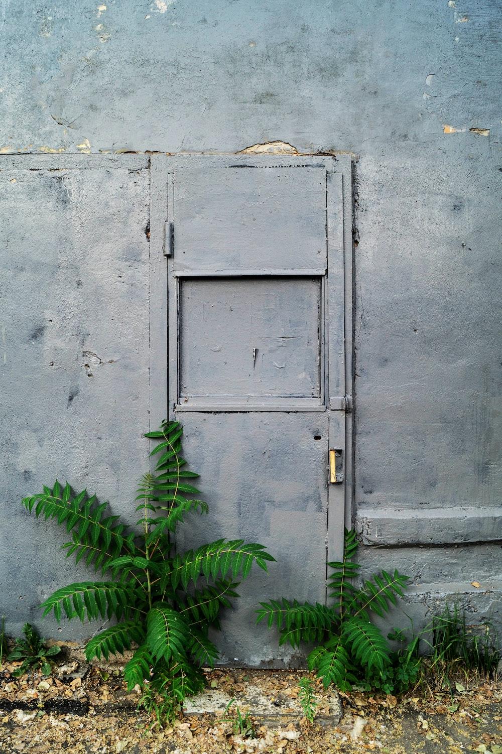green=leafed plants outside gray metal door