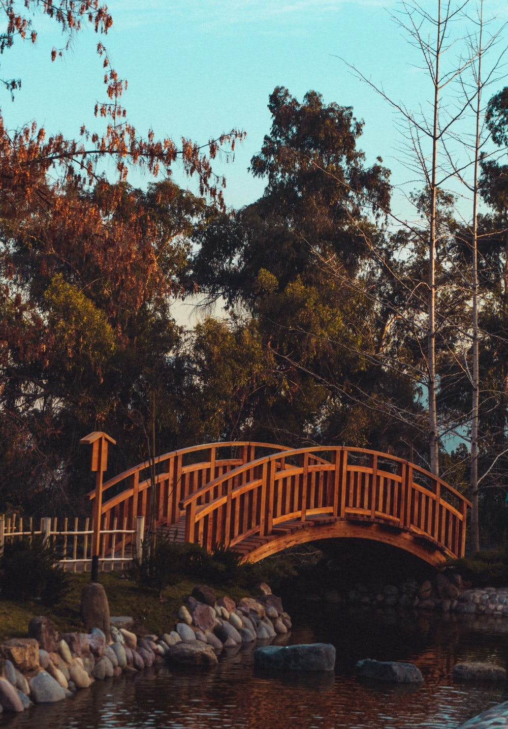 wooden bridge in pond