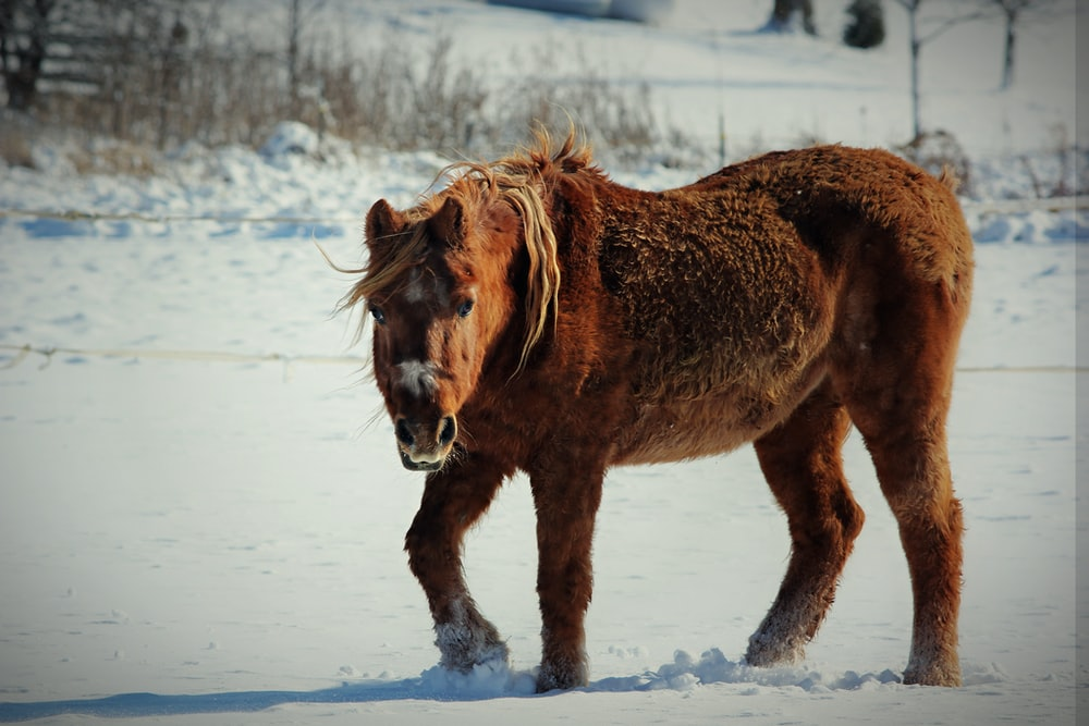 Pony Breeds - One Of The Most Popular