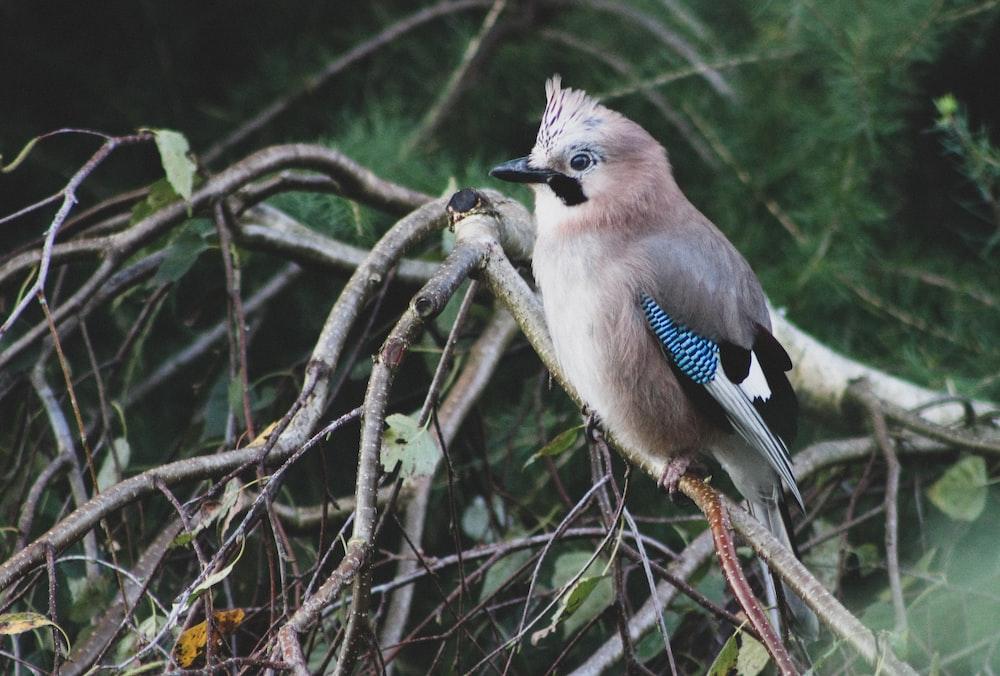 bird perch on tree branch