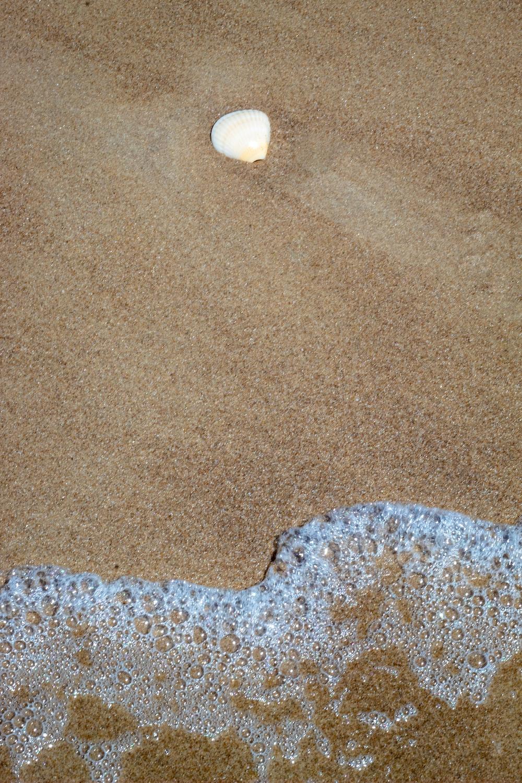 white seashell on seashore
