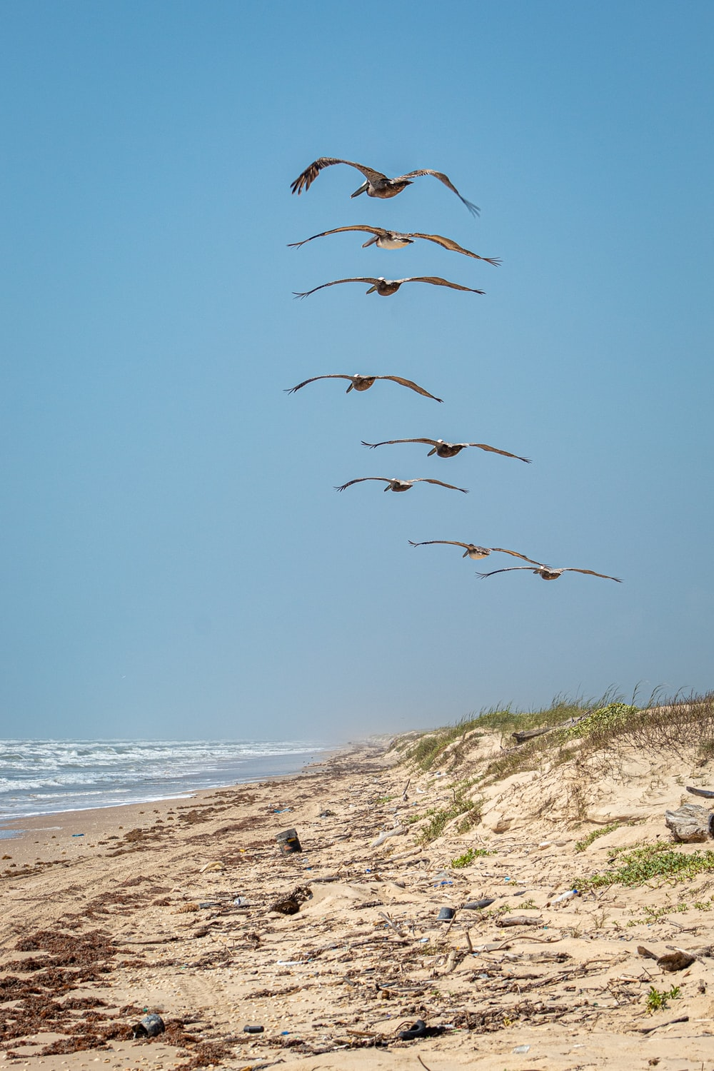 brown seagulls flying under calm sea