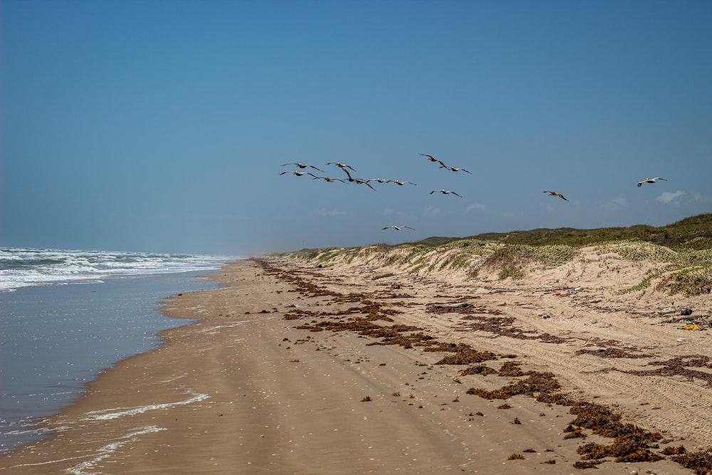 birds flying above seashore during daytime