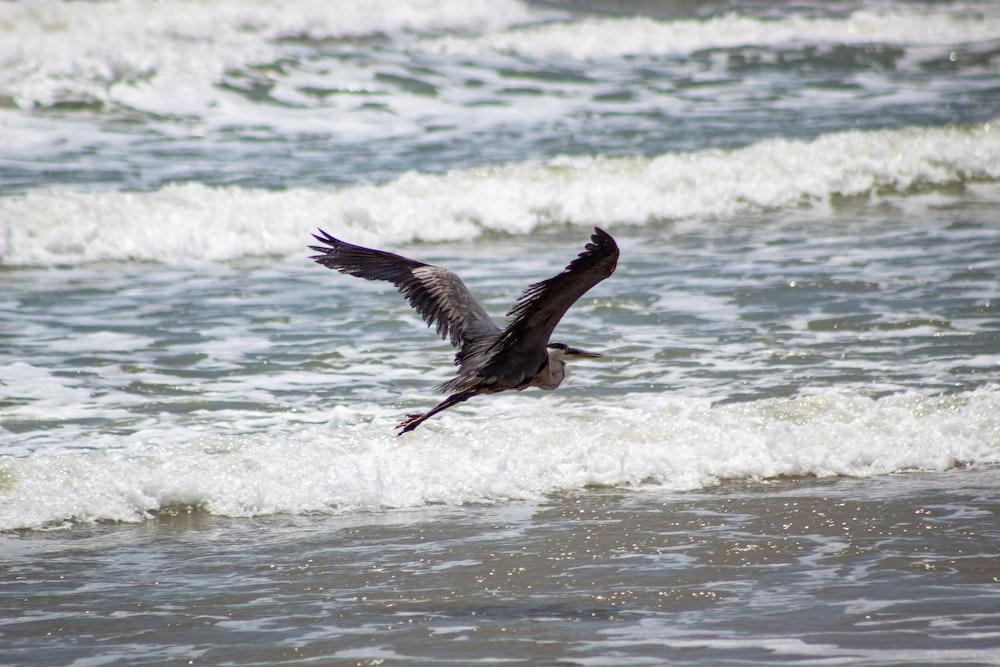 bird flying on body of water
