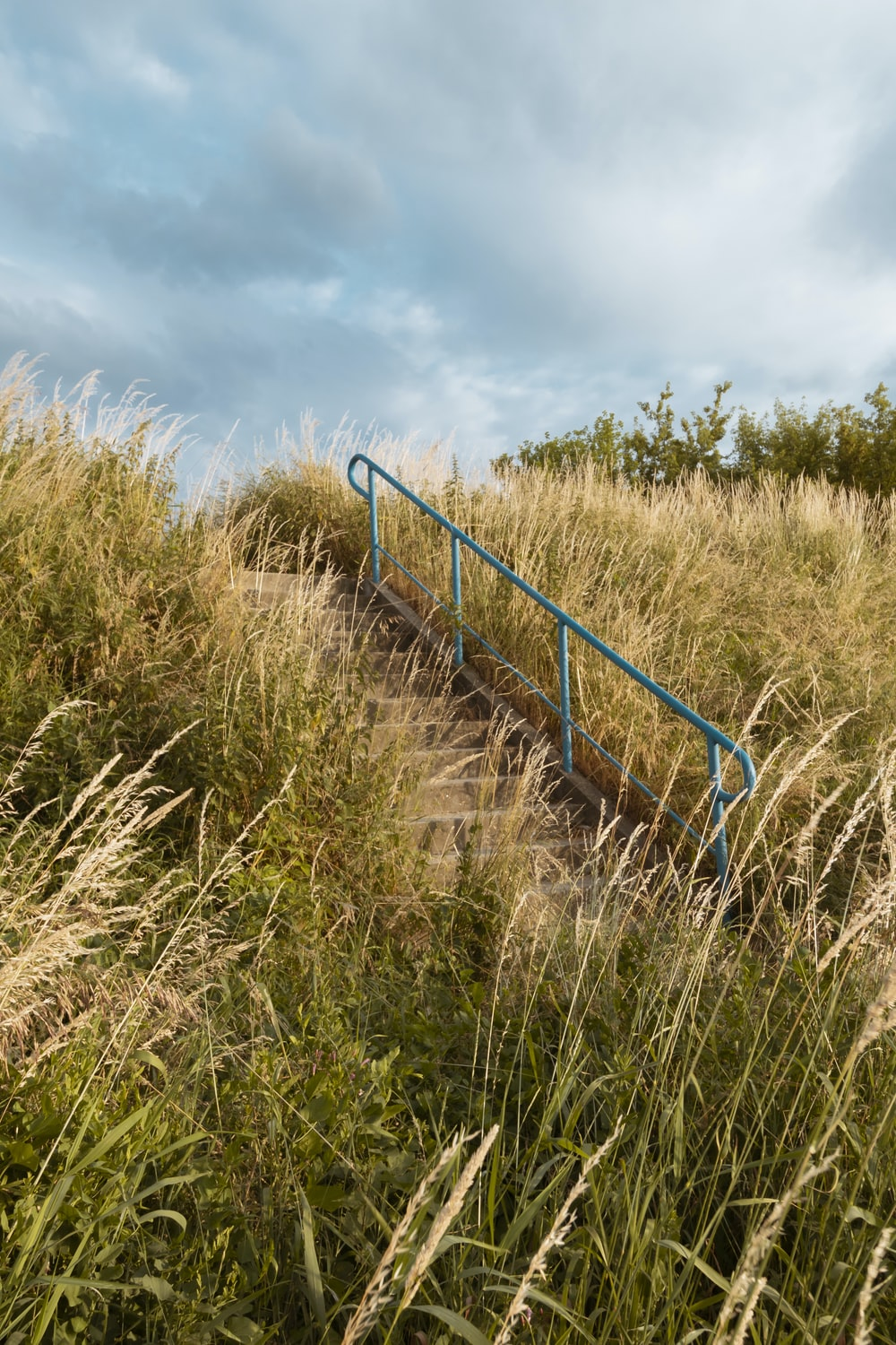 stairs between tall grasses