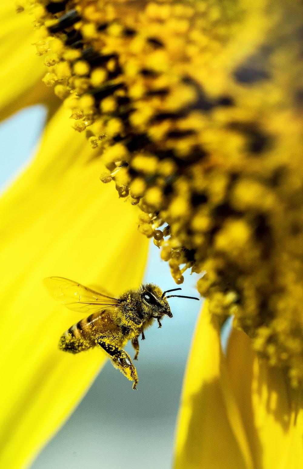 yellow bee flying beside flower