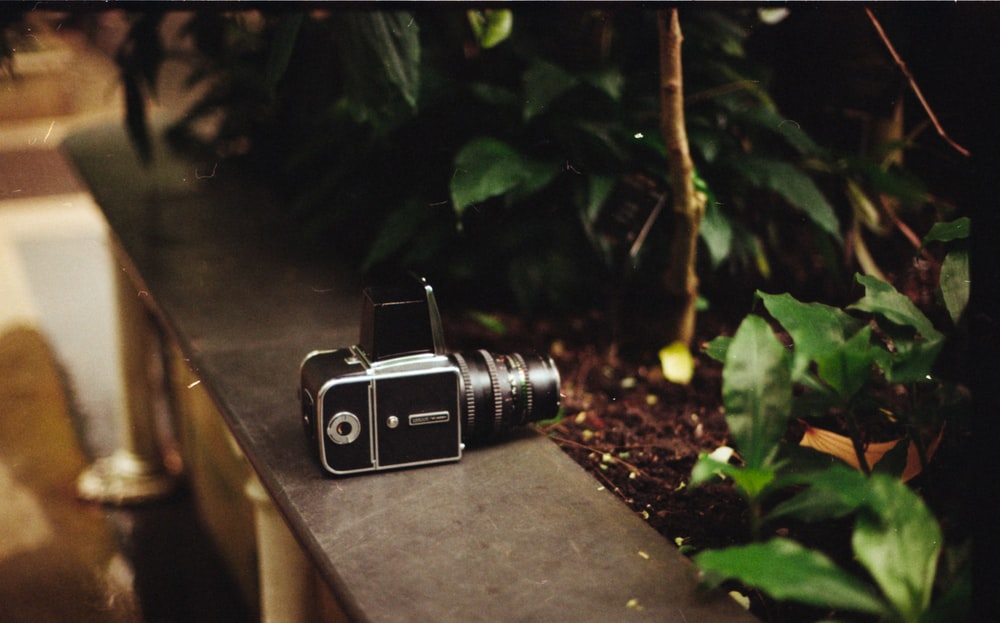 selective focus photography of camera beside plants