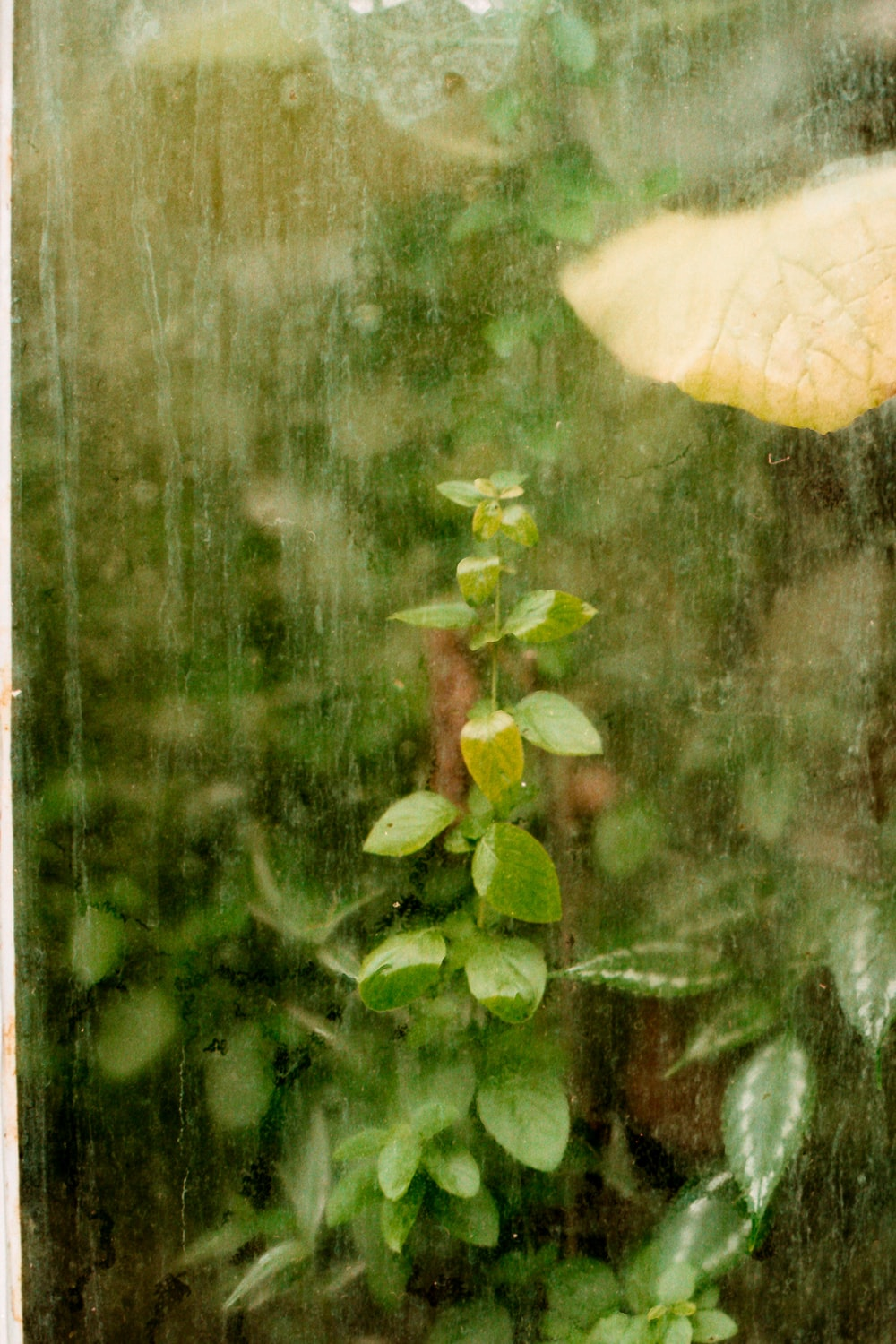 green-leafed plant near clear glass window with water droplets