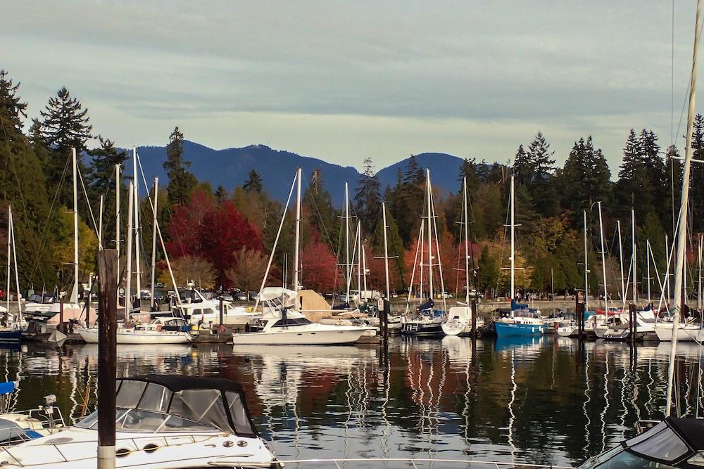 boats parked near trees