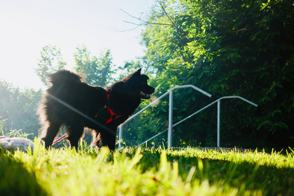 long-coated black dog on grass field