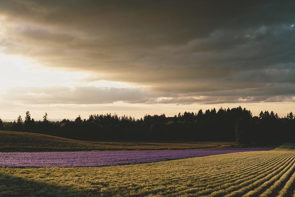 landscape photography green grass field