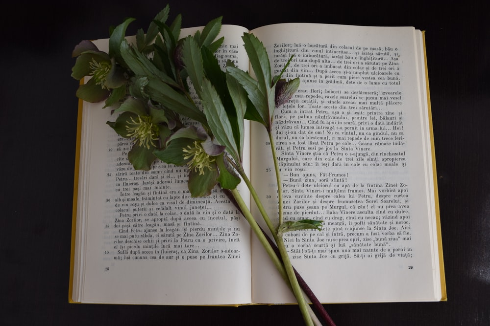 green plant on open book