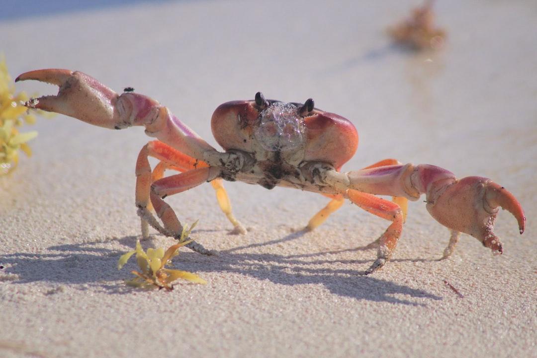 Rabid Crab