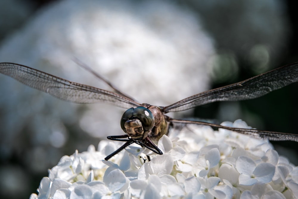 brown dragonfly on selective focus photography