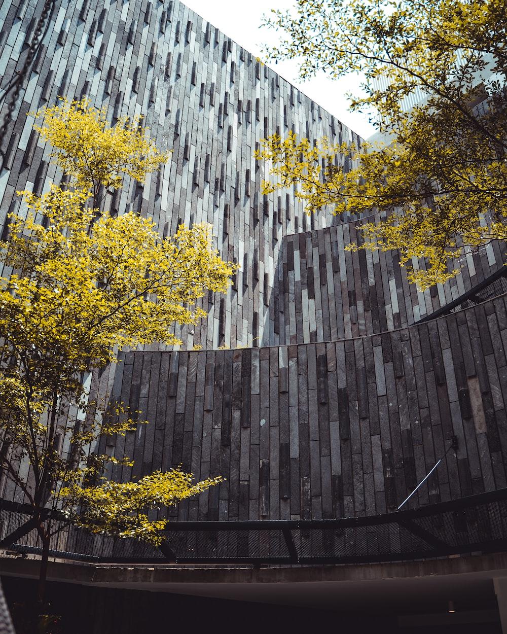 gray concrete building beside trees