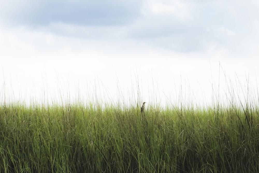green grass field photography