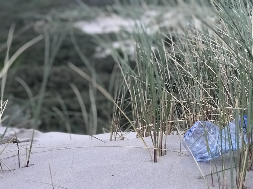 grass on sand during daytime