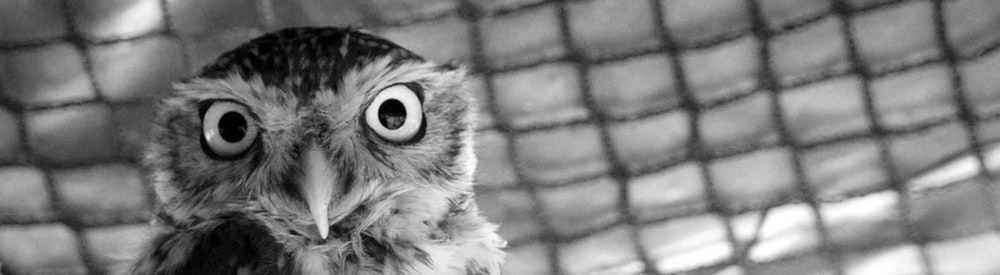 owl photography
