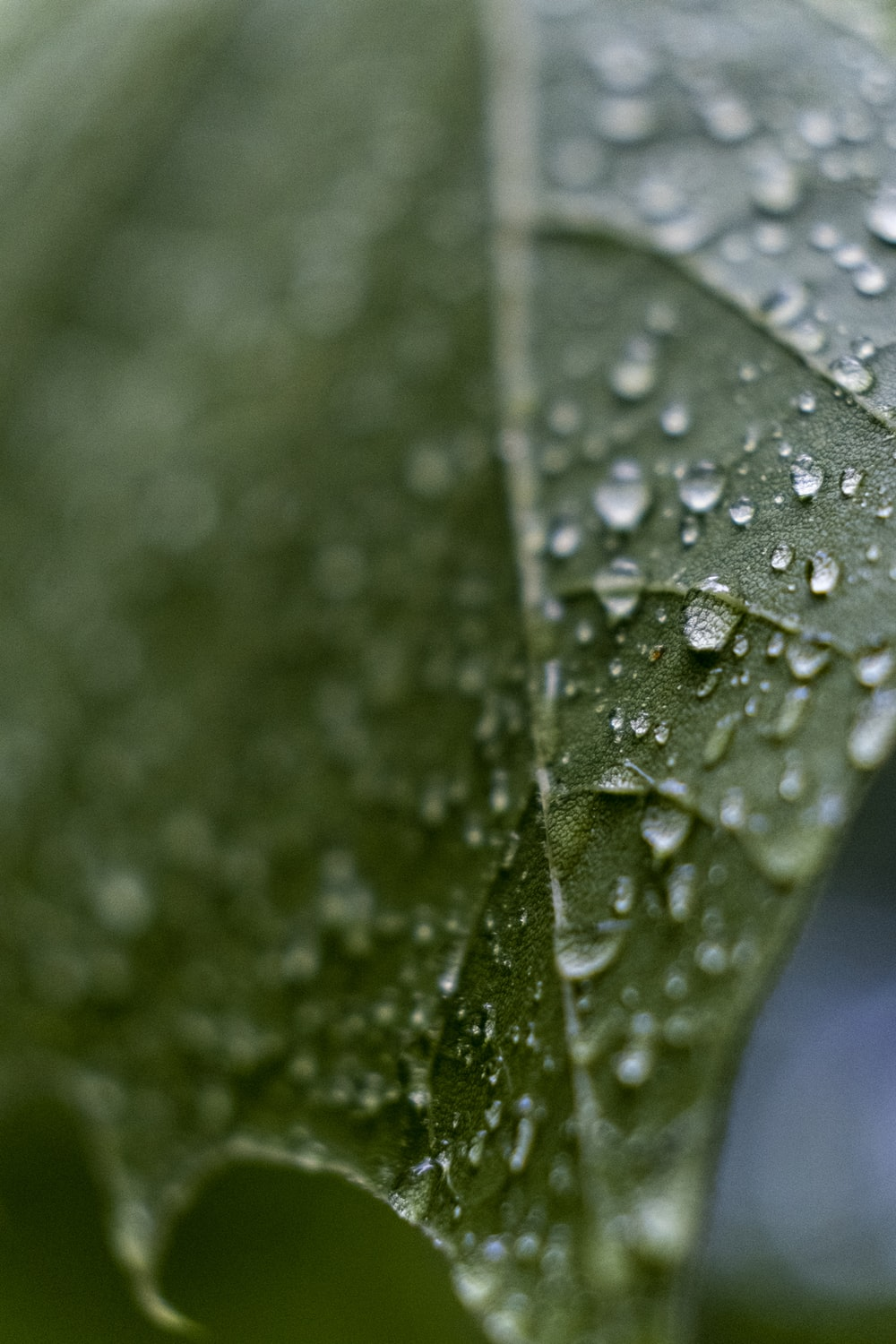 selective focus photo of leaf with water drops