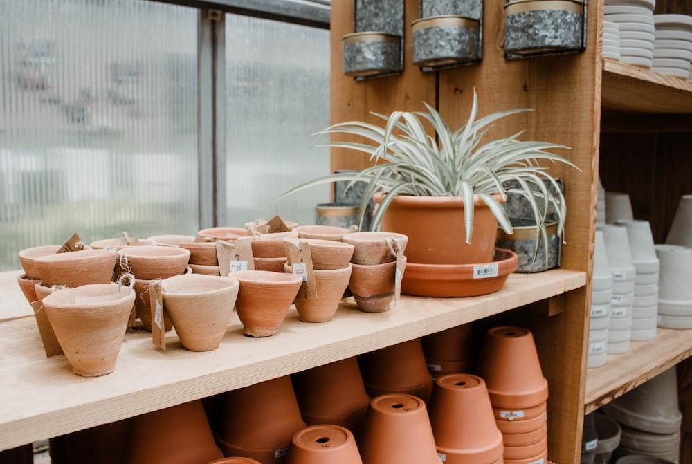 brown clay flowerpots on wooden shelves
