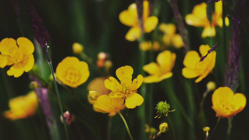 closeup photography of yellow-petaled flower