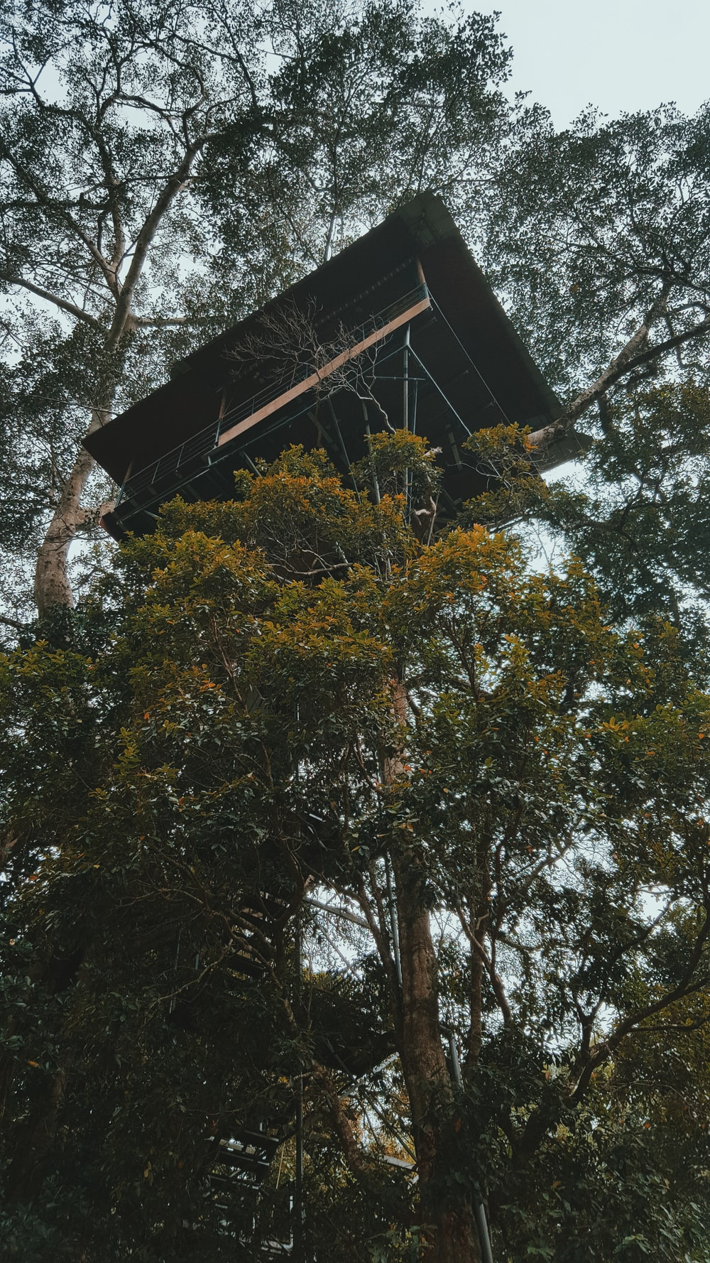 green-leafed tree with tree house during daytime
