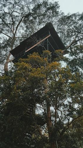 TreeHouse Homestay in Vythiri Resort
