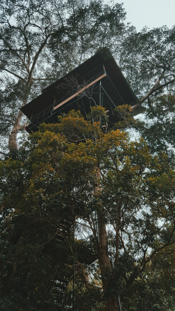 Treehouse at Wayanad