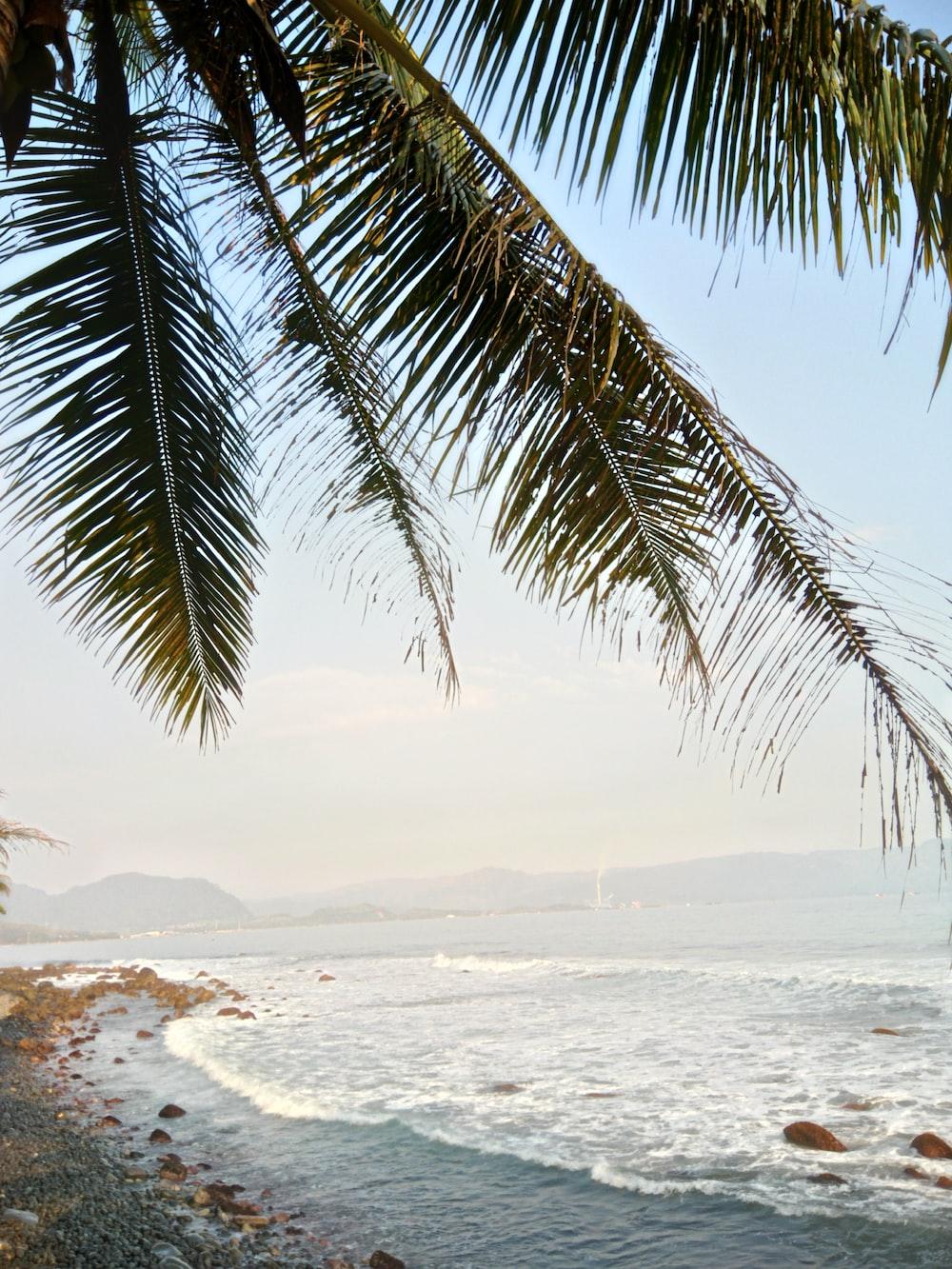 green palm tree across body of water