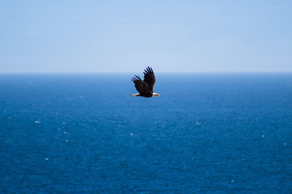 flying bird under blue sky at daytime