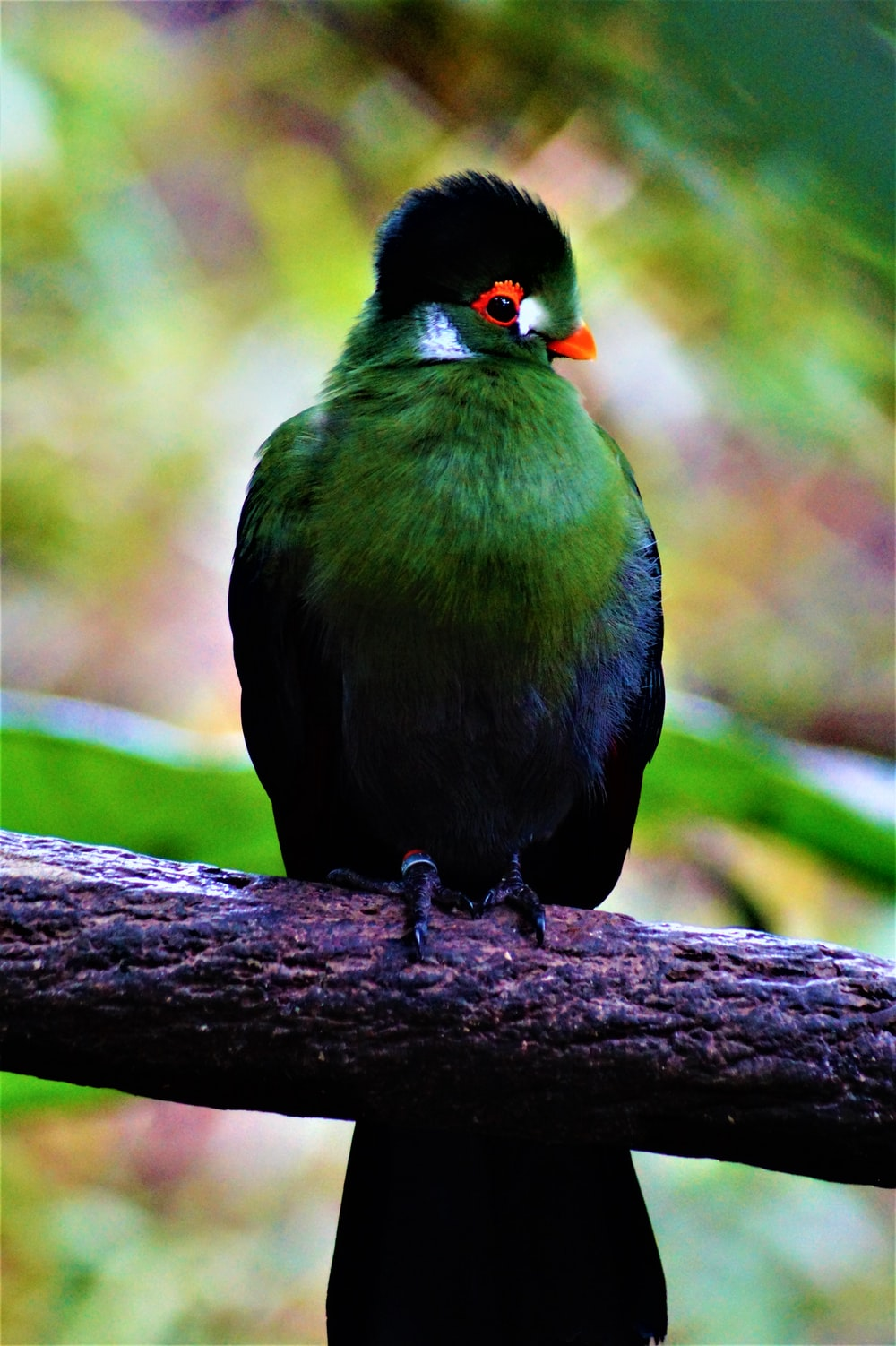 green and black bird on a branch