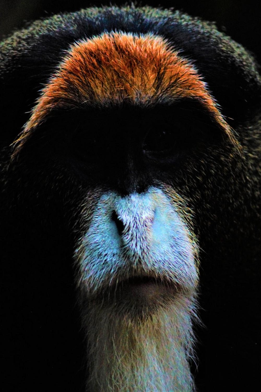 close photography of animal