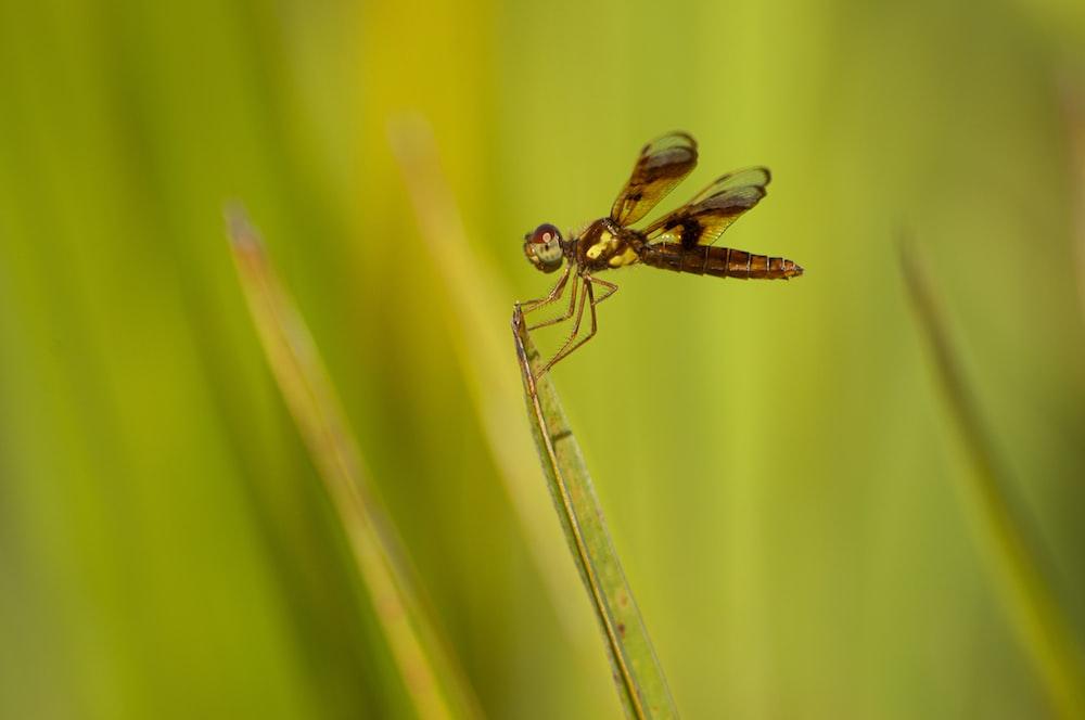brown dragonfly on tip of green leaf