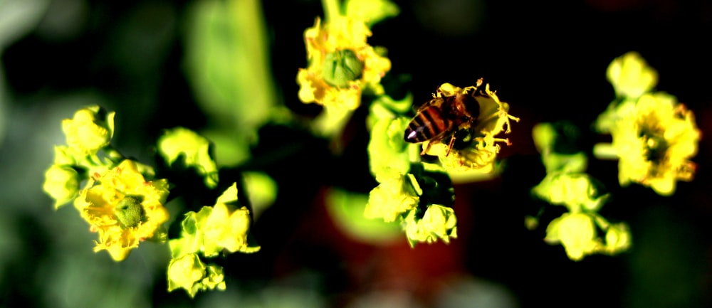 brown and black wasp on yellow orchid flowers