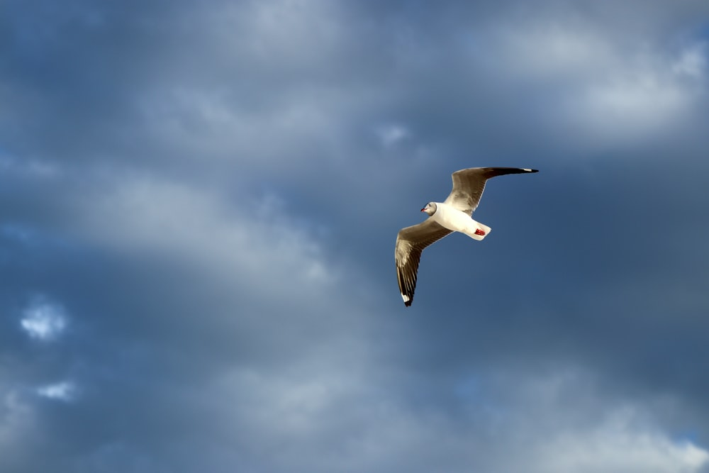 white and gray seagull bird flying