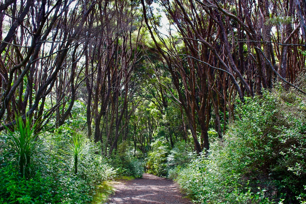 walkway in a forest